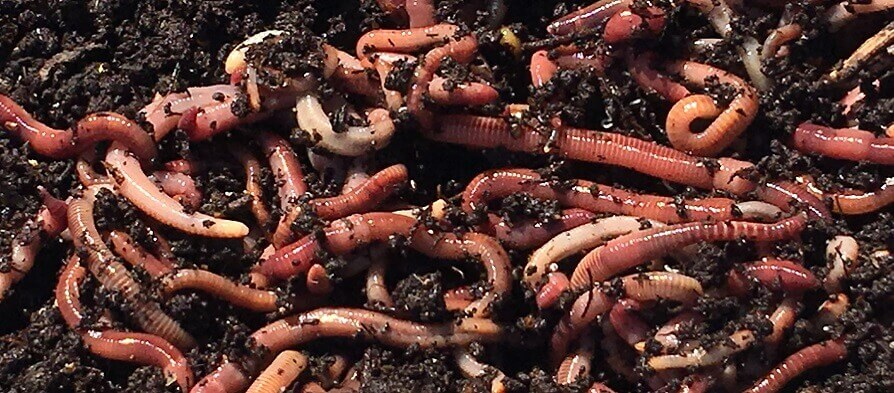 Reducing Waste With Worm Farms