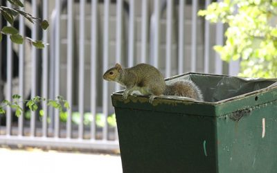How your home rubbish could be attracting pests, and how to avoid it